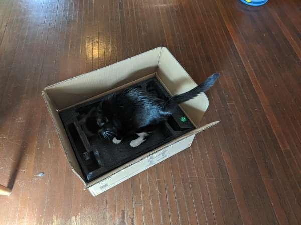 The cat leaps into the box...